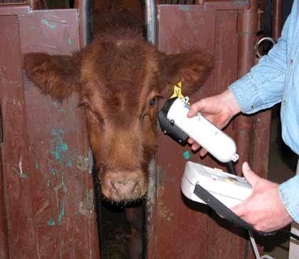 Augen auf: Kontron-Technik steuert Iris-Scanner für Kühe
