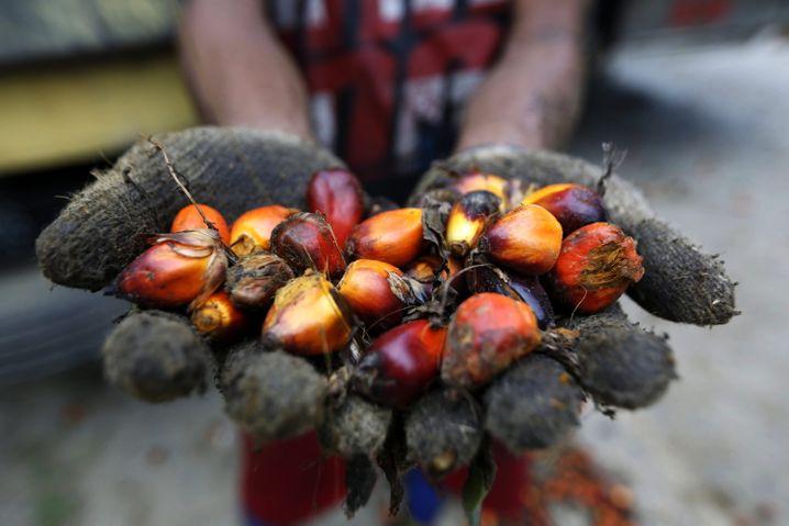 Die UN berichtet von sinkenden Lebensmittelpreisen - wie zum Beispiel für Palmöl