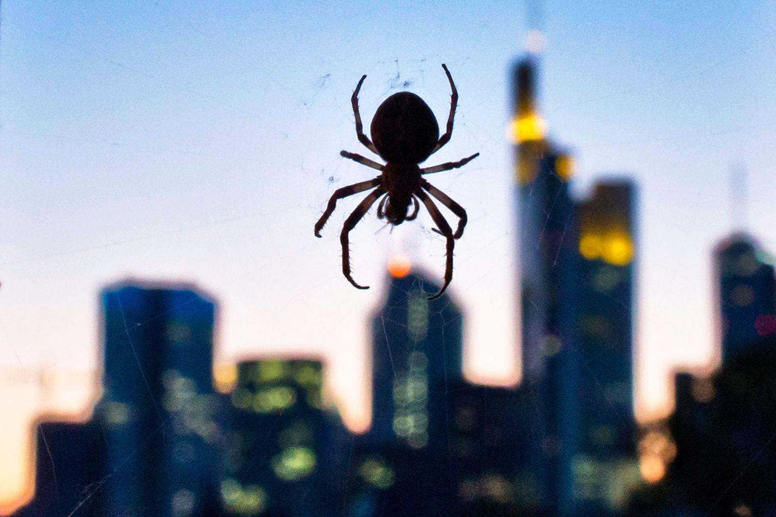 Frankfurt Banken-Viertel / Banken / Spinne vor Skyline