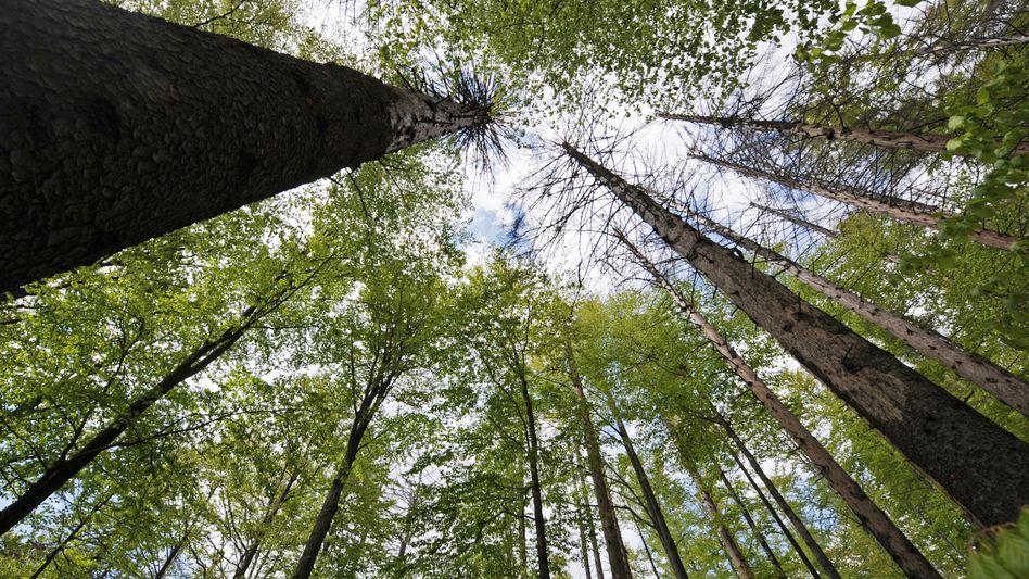 Nachhaltigkeit ist eigentlich ein Begriff aus der Forstwirtschaft - der aber mittlerweile in alle Bereiche des Lebens Eingang gefunden hat