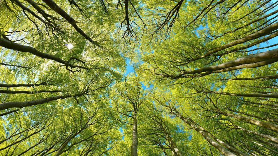 Grüner wirds nicht: Anleihen mit nachhaltigem Investitionszweck liegen im Trend