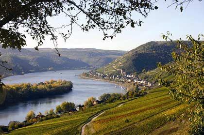 Der Rheingau bei Lorch: In der Region unterhalb der Taunushöhen Wein sollen schon die Römer Wein angebaut haben