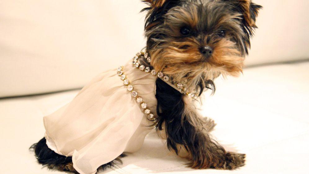 Hundeleben: Modegags und Schlachtzwinger
