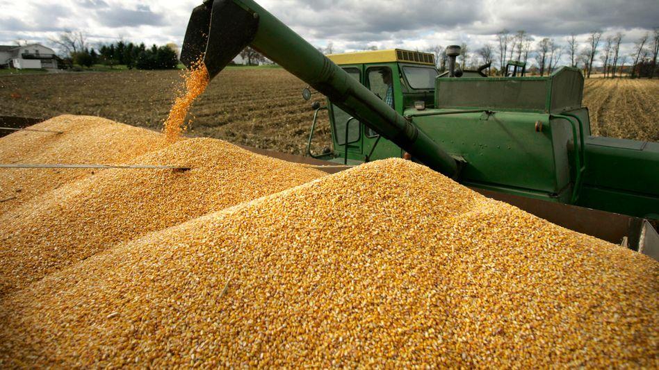 Maisernte in den USA: Die Börsenaufsicht will die Zahl der Terminkontrakte pro Händler beschränken