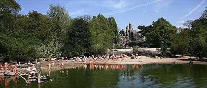 Felsenpanorama mit Flamingos