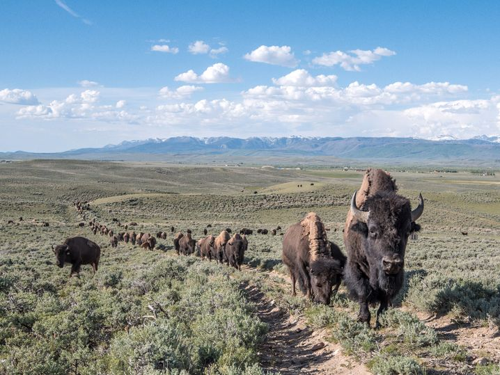 Idyll: Die Haub-Ranch in Wyoming