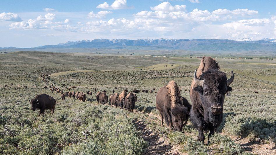 Streit im Paradies: Um ihre Ranch in Wyoming tobt ein Familienkrach