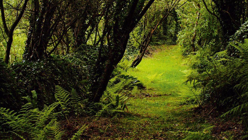 Glenkeen Garden: Ein Sehnsuchtsort in Irland