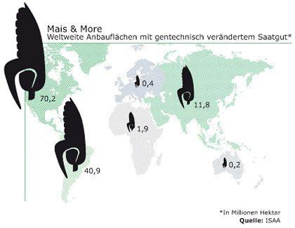 Mais & More: Weltweite Anbauflächen mit gentechnisch verändertem Saatgut