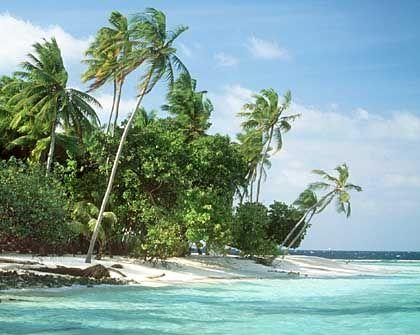 Mehr Reisen gebucht: Reiseunternehmen freuen sich über steigende Buchungszahlen