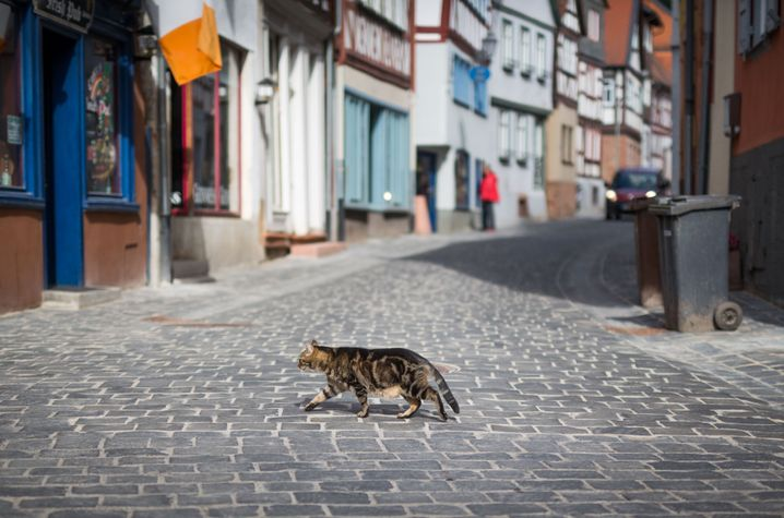 Katze auf einer Straße: Für Roboterautos ist die Unterscheidung von einer aufgewirbelten Papiertüte schwierig