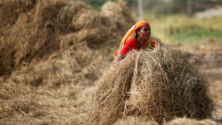 Getreidepreise: Welche Länder es am stärksten trifft