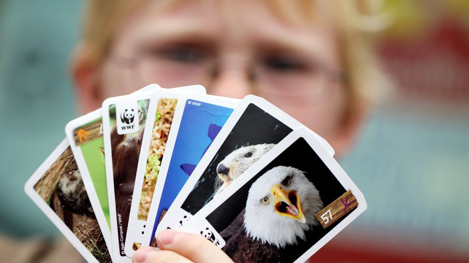Hacker-Angriff: Zehntausende Sammler von Tier- und Fußballbildern des Handelskonzerns Rewe sind von einem Datenklau betroffen. Die Sammler wurden aufgefordert, ihr Passwort zu ändern