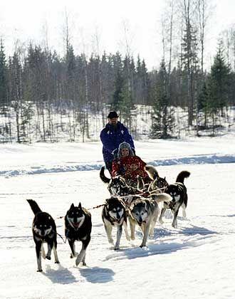 Vergnügen im Winter: Eine Tour mit dem Hundeschlitten