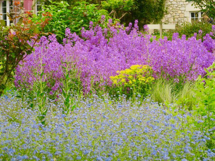 Die Jardins de Coursiana in La Romieu in Frankreichs Südwesten warten mit einer Fülle blühender Pflanzen auf.