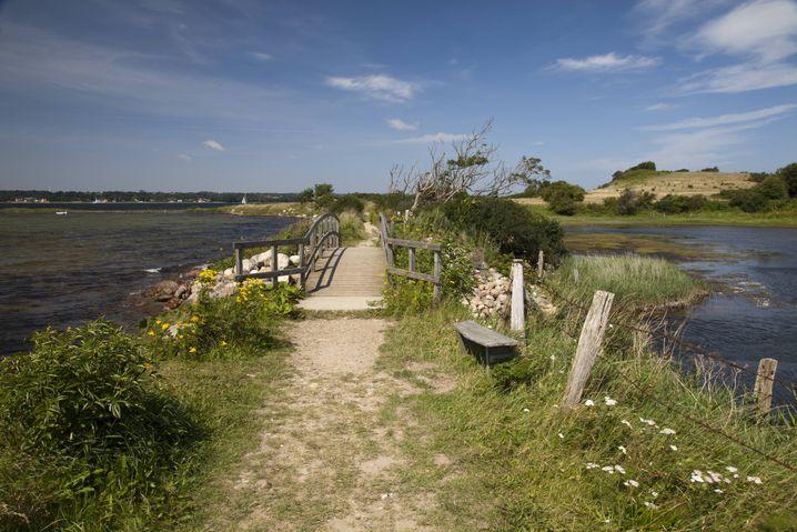 Wanderweg und Holzbrücke im Naturschutzgebiet Holnis