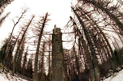 Waldsterben: Auslöser der Ökowelle in Deutschland