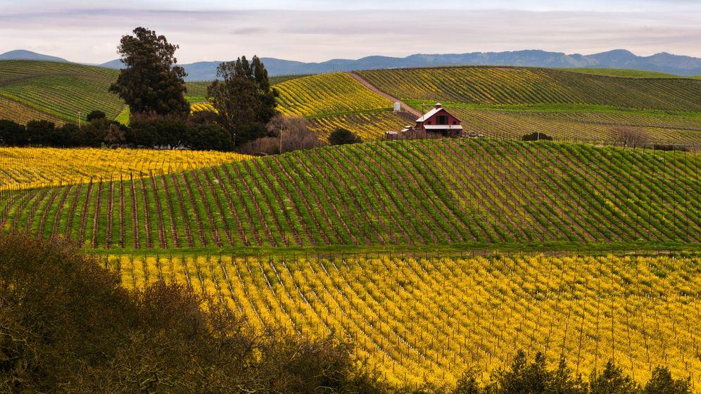 Kalifornische Weingüter: Das Urlaubsparadies Napa