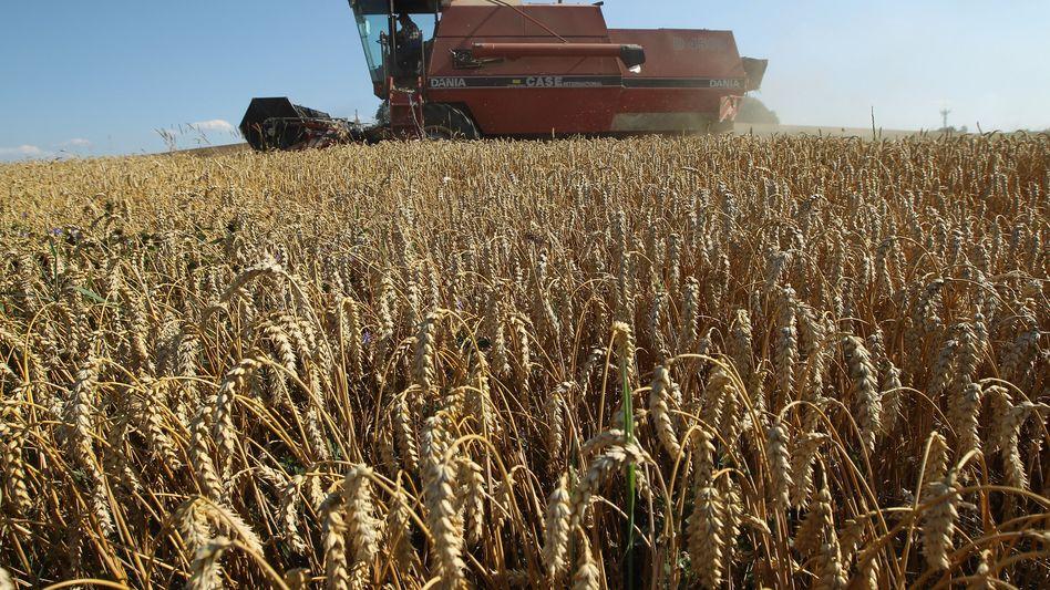 Weizenernte: Ursprünglich zur Preisabsicherung für Landwirte gedacht, dienen Agrar-Futures heute vor allem der Spekulation
