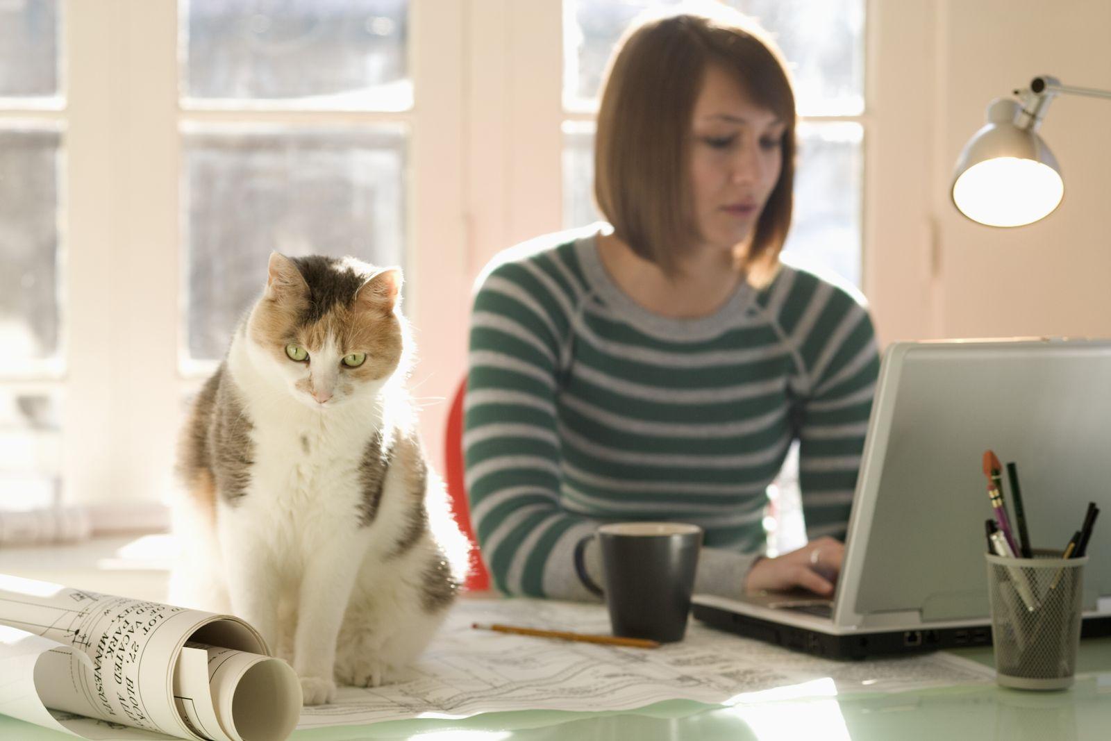NICHT MEHR VERWENDEN! - Katze / Computer / Heimarbeit / Homeoffice