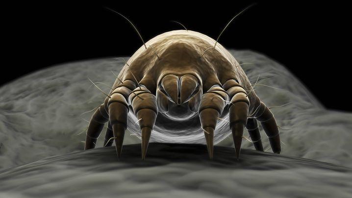 Extrem flexibel, extrem resilient: Die Milbe gibt niemals auf, sie macht höchstens mal langsamer