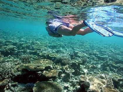 Taucherparadies: Die maledivischen Korallenriffe gelten als erste Adresse