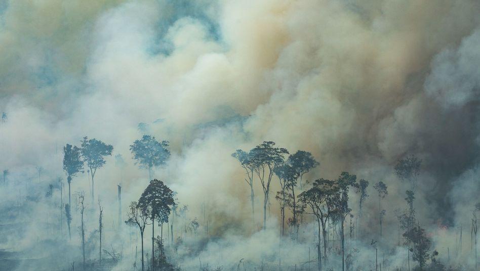 Waldbrände in Brasilien: Die schwersten Feuer seit Jahren