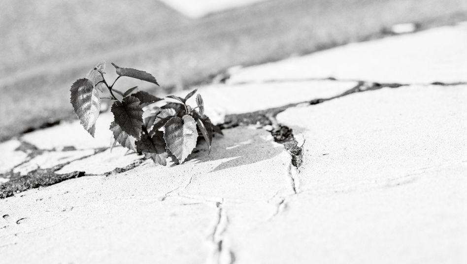 In seiner Serie Tic Tac Toe zeigt der Hamburger Fotograf Enver Hirsch Verkehrsinseln, auf denen Pflanzen trotz widriger Umstände gedeihen – eine Metapher für menschliche Resilienz.