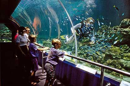 """Riff-Erlebnis ohne nasse Füße: Im """"Reef HQ"""" in Townsville können Touristen etwa 10 Prozent der Fischarten aus dem Great Barrier Reef kennen lernen"""