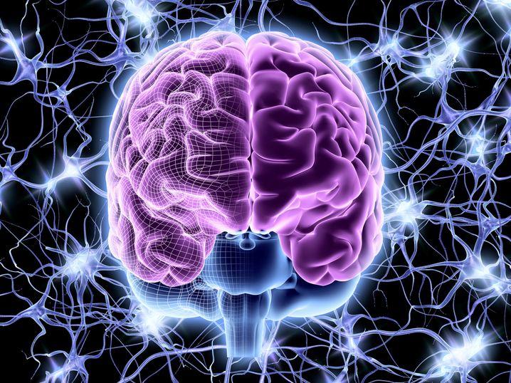 Menschliches Gehirn: Meditation bremst den altersbedingten Substanzverlust im Kopf