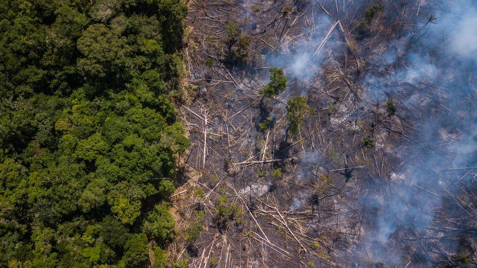 Rauch über dem Amazonas-Regenwald in Brasilien