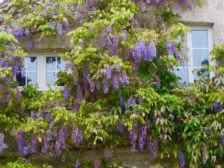 Große Vielfalt: Die Jardins de Coursiana im Südwesten Frankreichs sind als Park von besonderem botanischen Interesse klassifiziert.