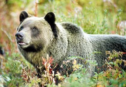 Sag mir wo die Bären sind: Der Dax notiert auf Sechsjahreshoch