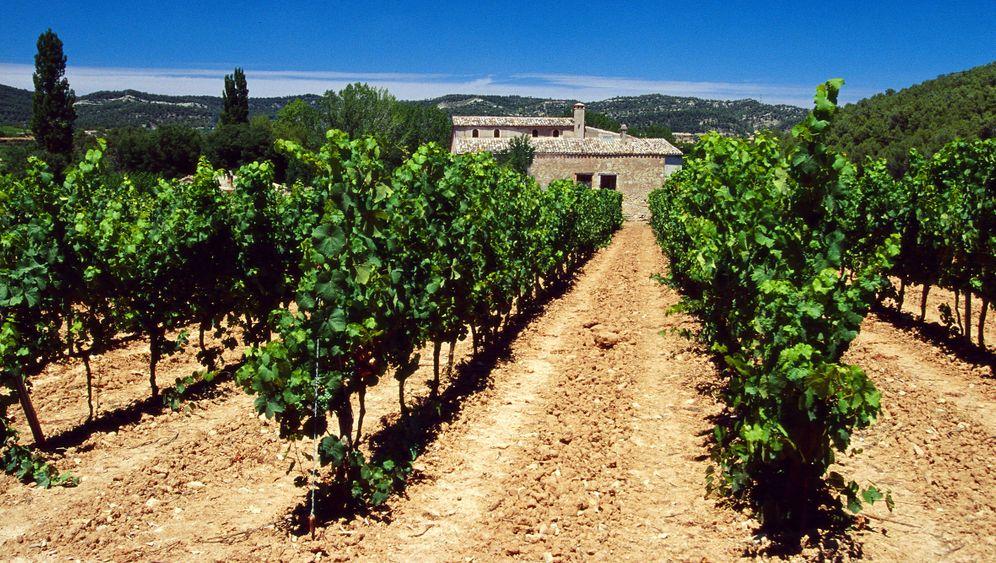 Torres: Das Weltweinunternehmen aus Spanien