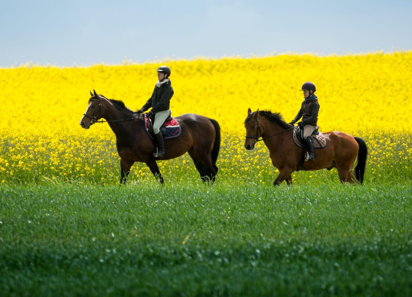 Reiten / Pferde