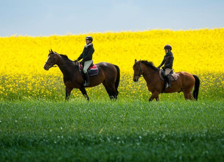 Rauf aus Pferd und raus aus dem Alltag: Brechen Sie im Urlaub mit Gewohnheiten
