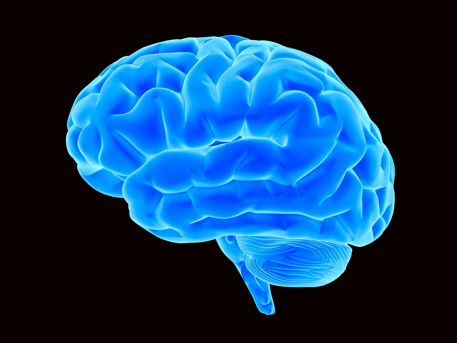 NICHT MEHR VERWENDEN! - Symbolbild Wissenschaft/ Gehirn
