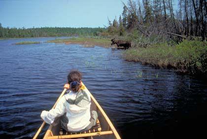 Absolute Einsamkeit: Im Algonquin Park in Ontario kann man fast unberührte Natur genießen