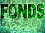 Willkommen im Dschungel: Pfadfinder-Tipps für den Weg zum passenden Fonds