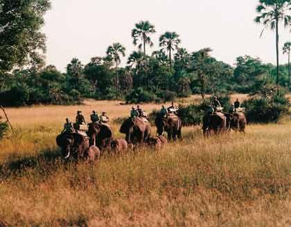 Hoch zu Elefant in Afrika