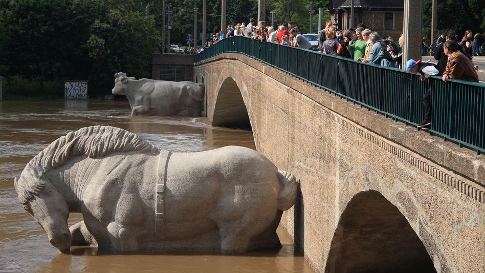 Fast acht Meter: Halle an der Saale registriert die höchsten Pegelstände seit Jahrhunderten
