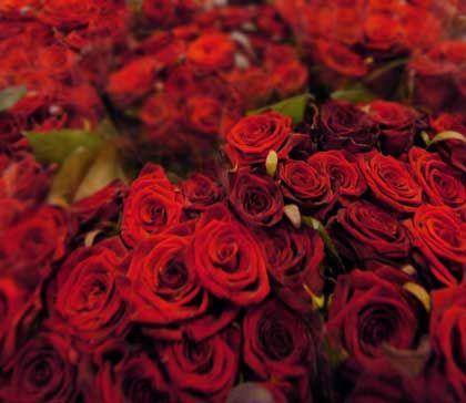 Aromatisch: Fast alle Blumen sind essbar, nur ist das weitgehend in Vergessenheit geraten
