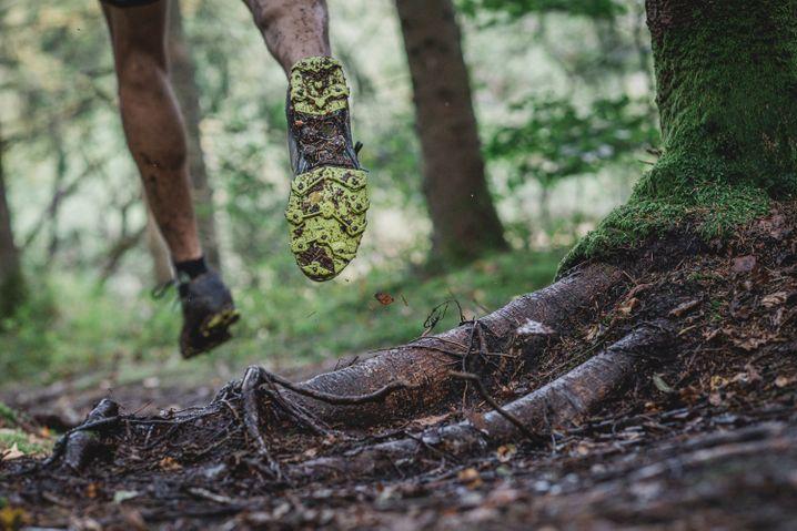 Achtung, Stolperfallen: Beim Laufen über von Wurzeln gesäumten Wegen wird das Hirn mehr gefordert als auf ebenen Untergründen
