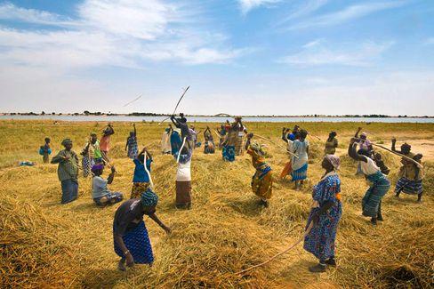 Hilfe zur Selbsthilfe: Der Welternährungsgipfel will die Mittel für arme Länder erhöhen