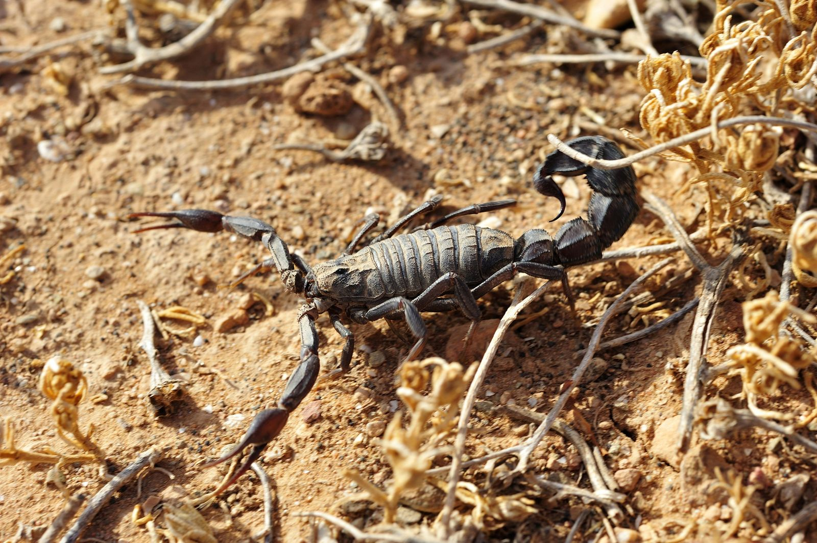 NICHT MEHR VERWENDEN! - Skorpion