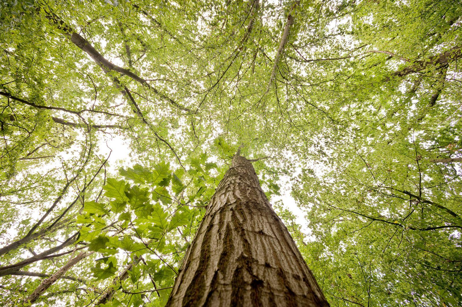 Wald als Bremse des Klimawandels