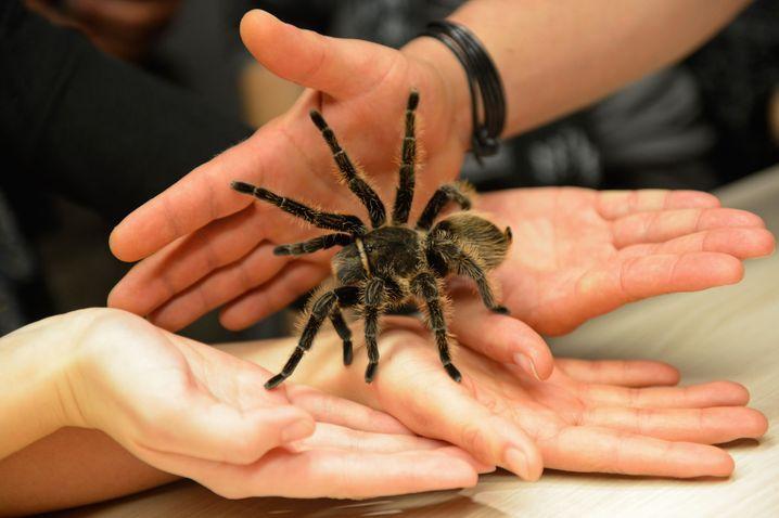 Angst vor Spinnen? Ist weitverbreitet. Und wie schaut es mit der Angst vor der Zukunft aus?