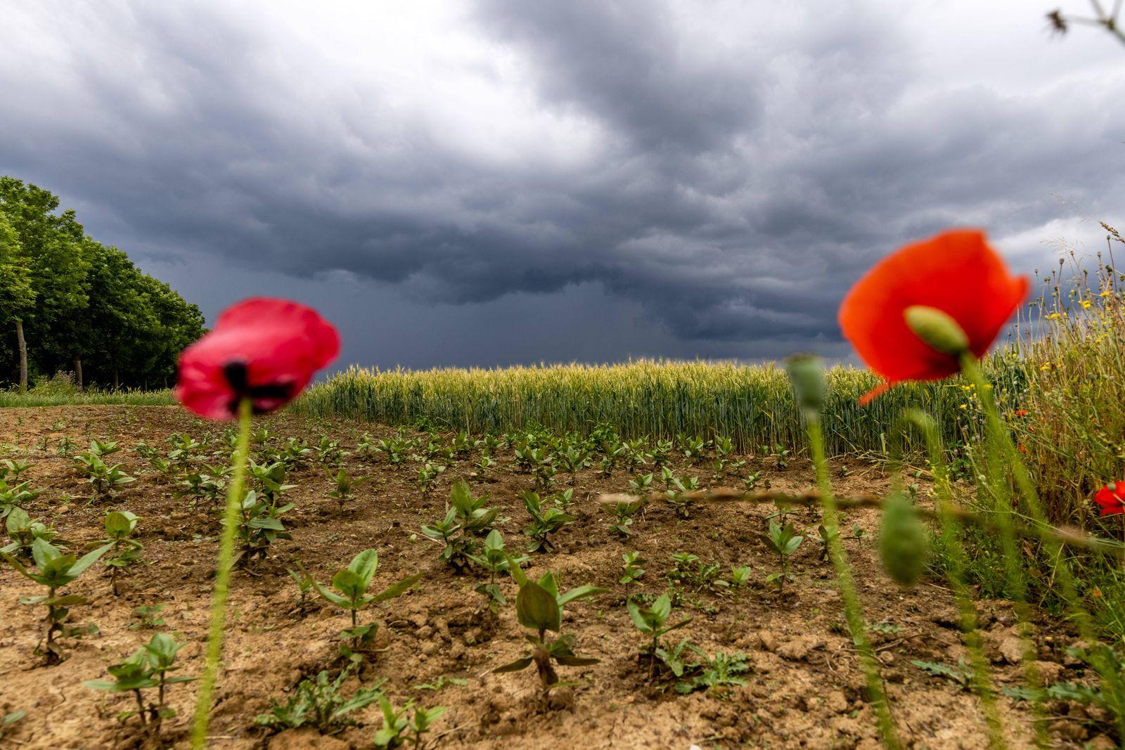 Gewitter in Hessen Dunkle Wolken eines Gewitters über der Wetterau sind von Bad Homburg aus über einem Kornfeld zu sehe
