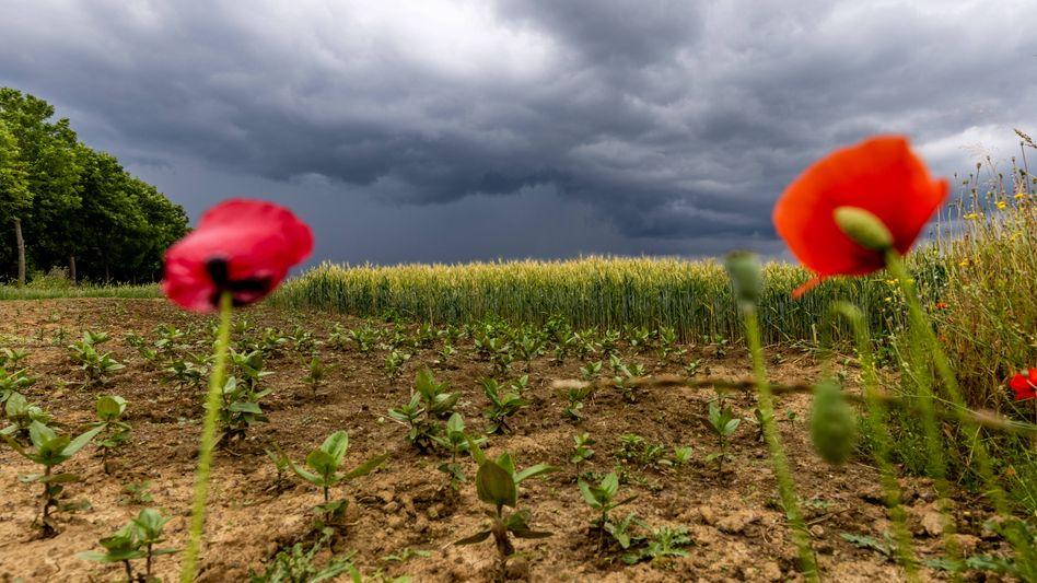 Dunkle Wolken ziehen auf: Experten sind sich einig, dass der Klimawandel aufgehalten werden sollte