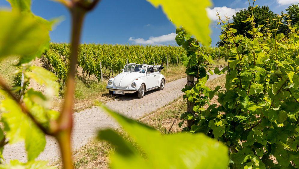 Rheingau: Zu Gast bei den Stars der Weinszene